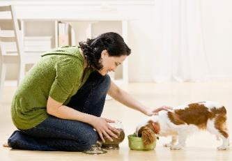 dog walkers montreal, pet sitting, cats, birds, small animals, overnight